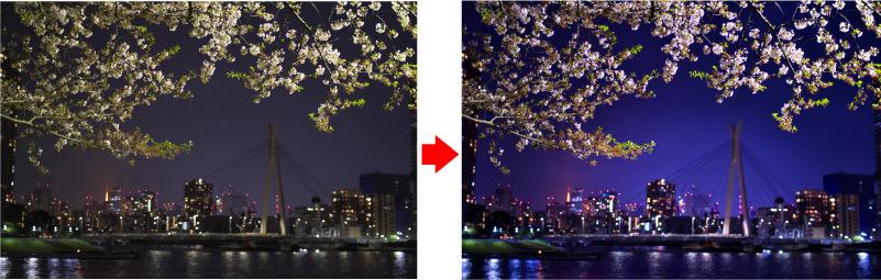 RAW現像 桜 夜景