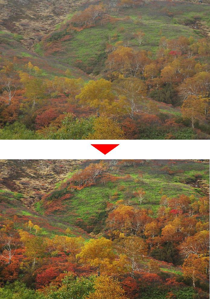紅葉写真の霞をトーンカーブで調整した結果