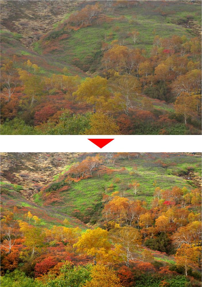 紅葉写真を綺麗に仕上げる方法