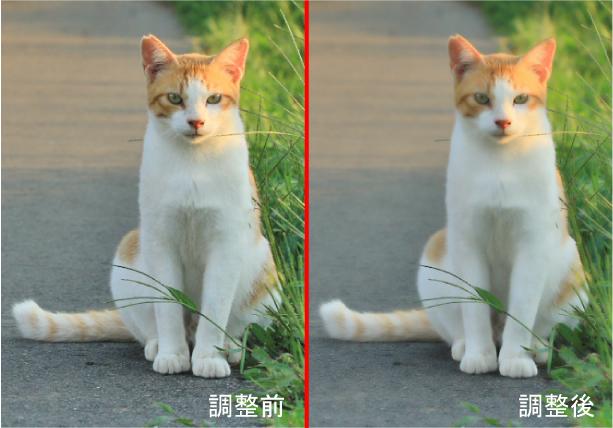 ネコの毛並を柔らかく調整する