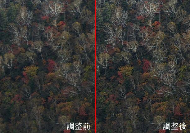 霞除去した時の紅葉の比較