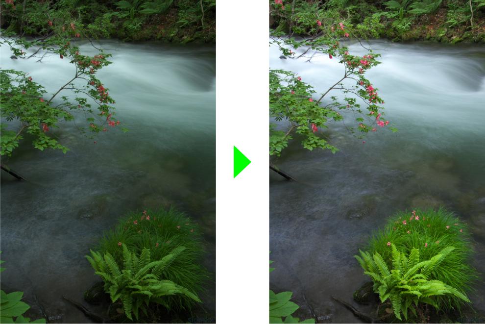 ツツジの強調 奥入瀬渓流