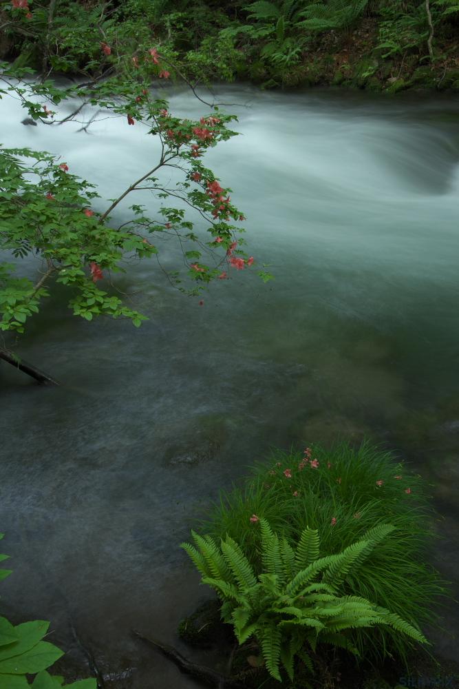 新緑の奥入瀬を綺麗に画像調整