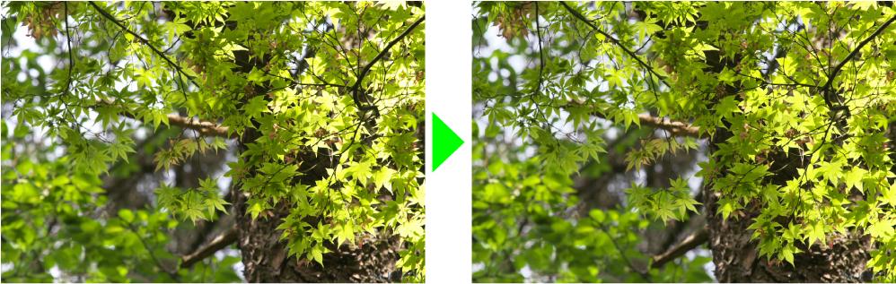 新緑の白とびを改善
