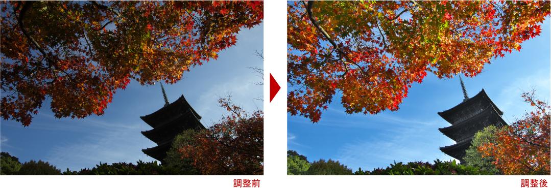 紅葉東寺写真調整