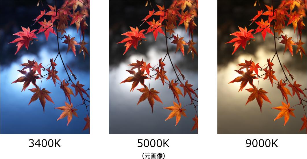 紅葉の印象を変えるホワイトバランスの調整例
