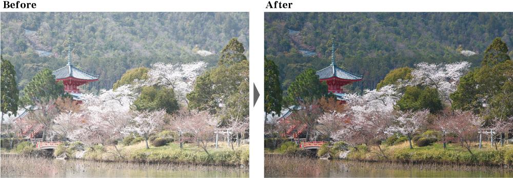 桜 かすみ除去