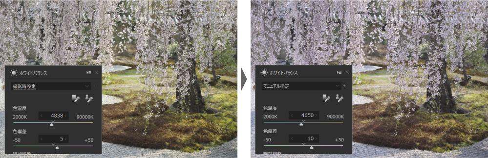 桜の写真 ホワイトバランスは?