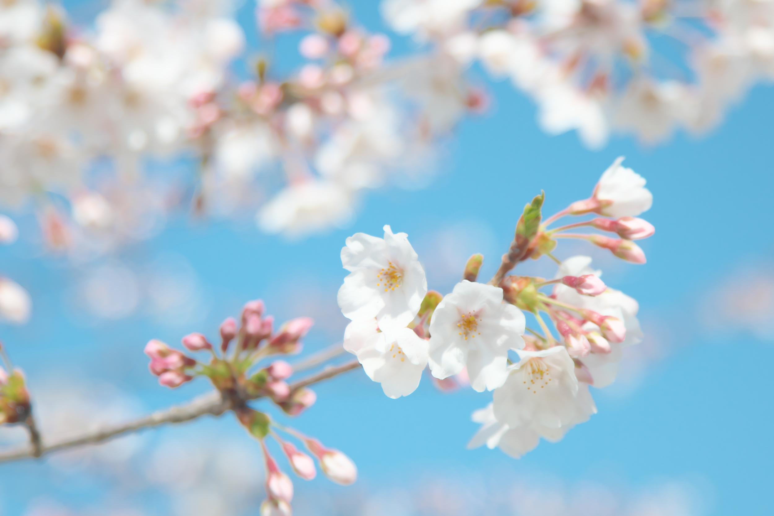 花の写真をRAW現像でハイキー調の写真に仕上げよう
