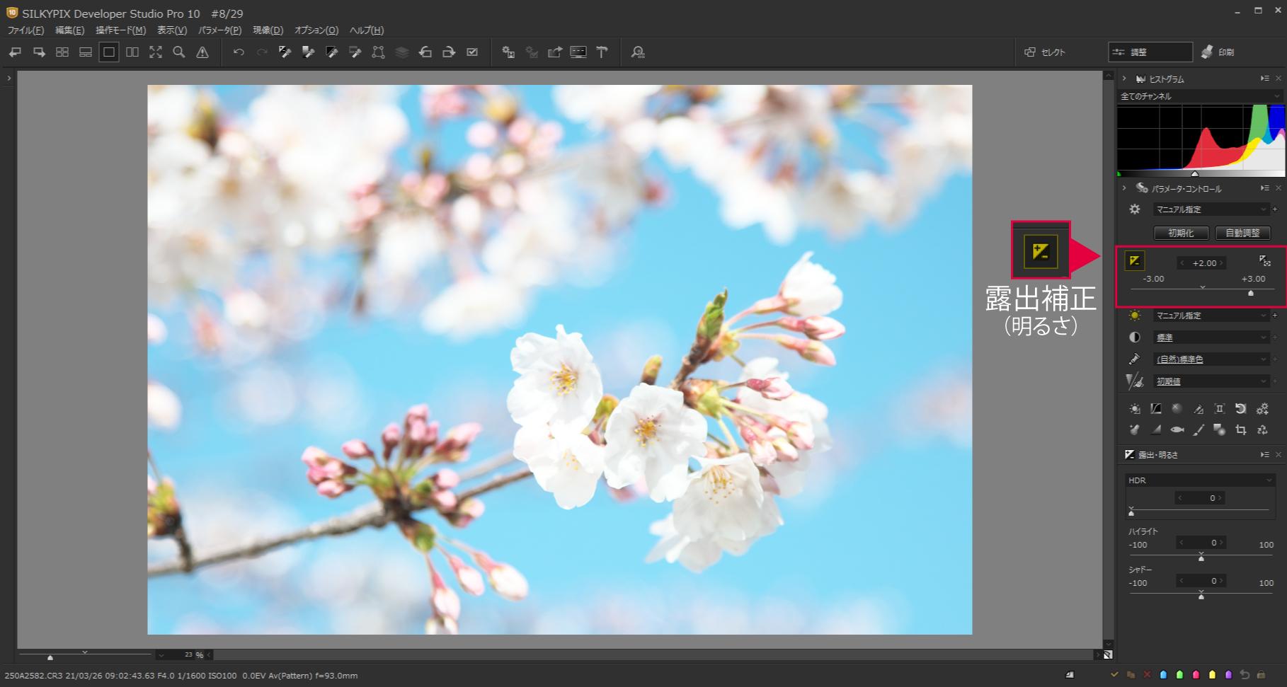 桜をハイキー調2