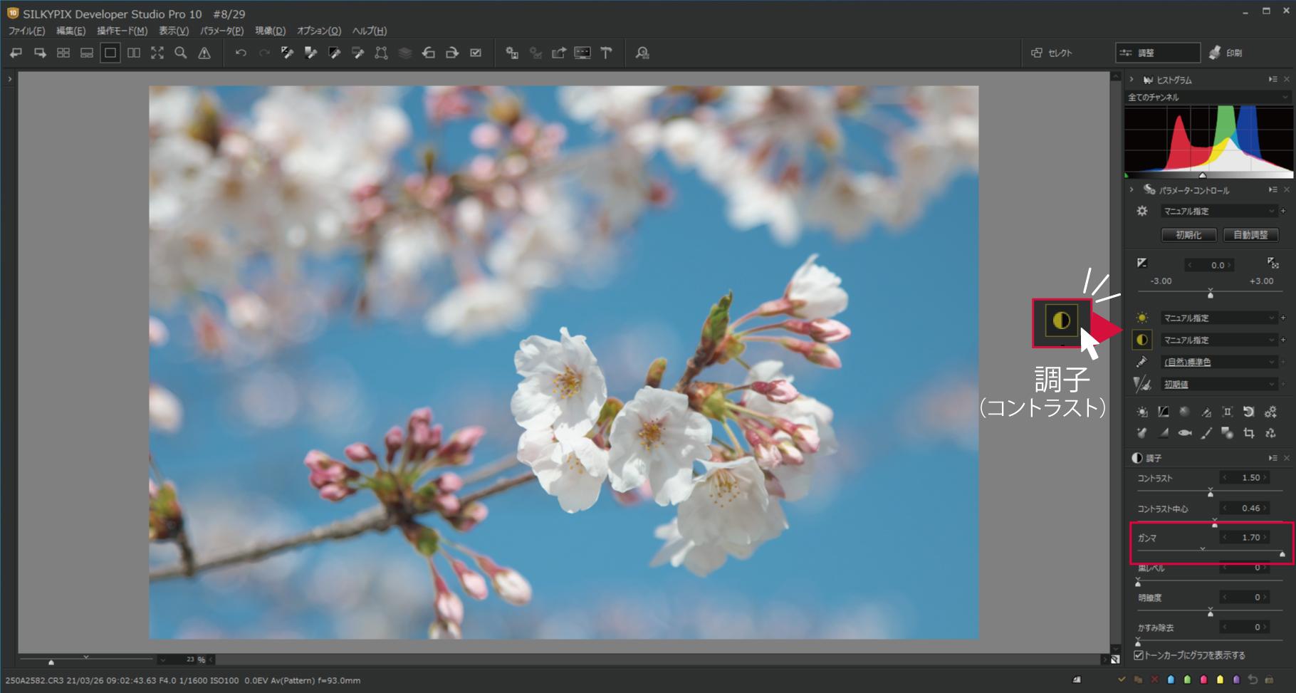 桜をハイキー調3