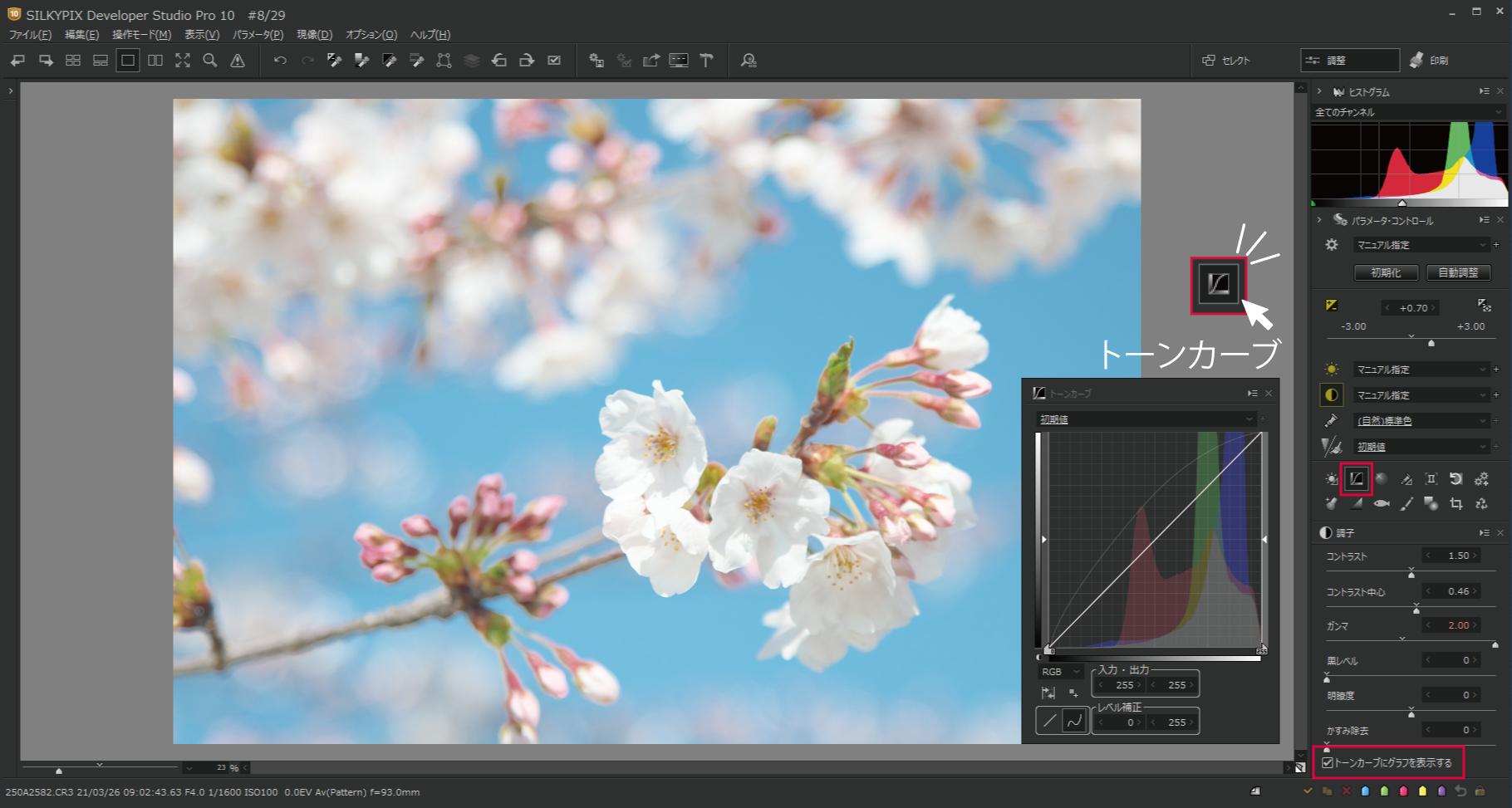 桜をハイキー調5