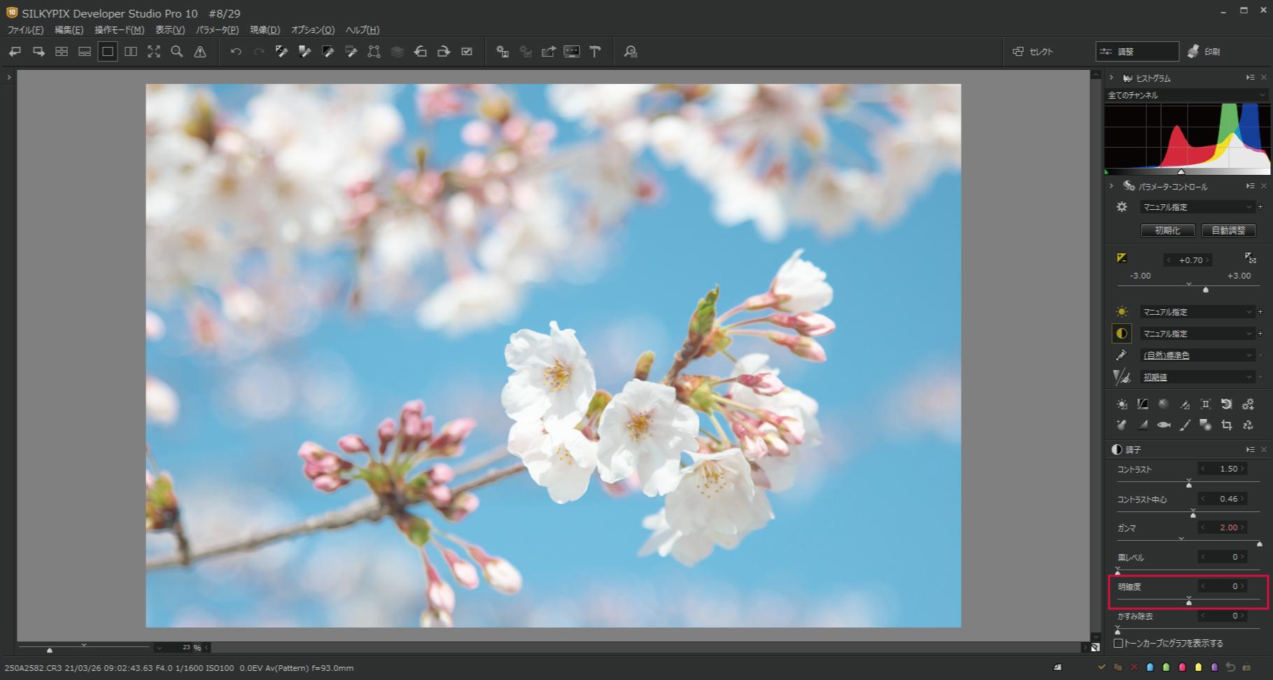 桜をハイキー調 明瞭度1