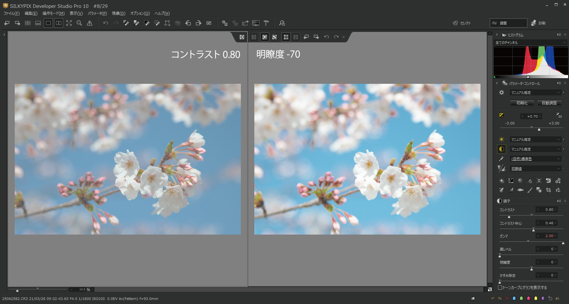 桜をハイキー調 明瞭度3