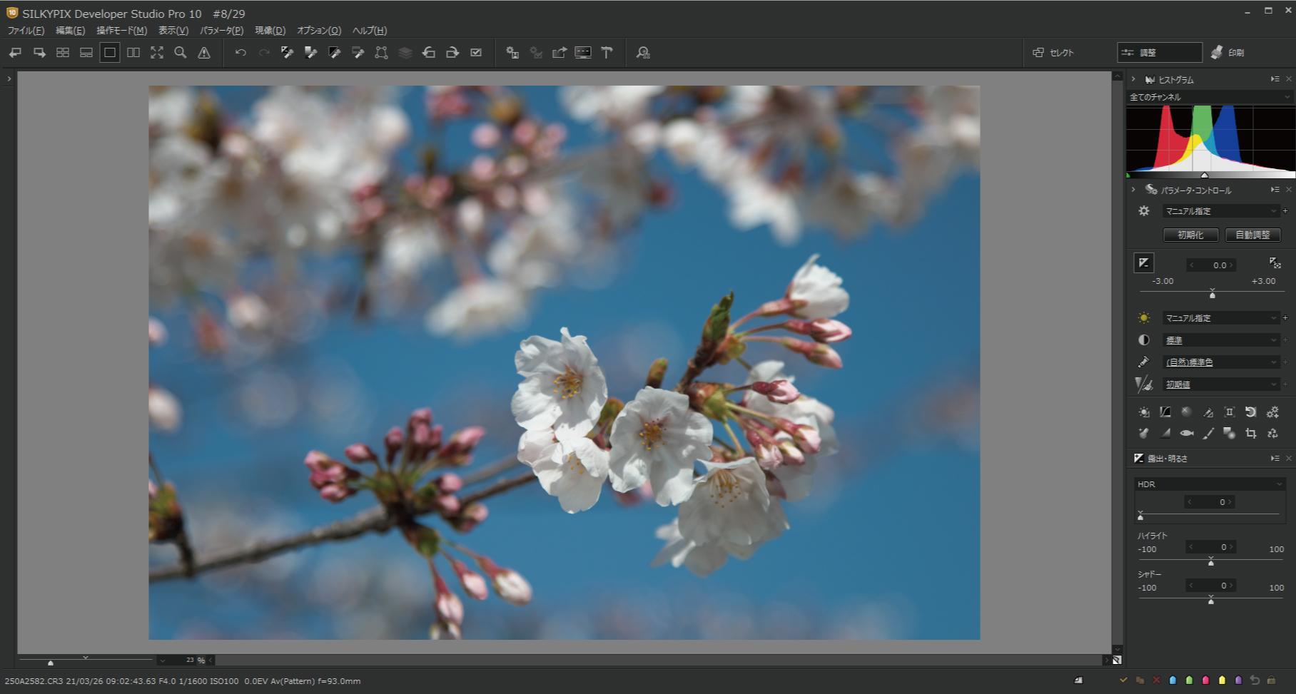 桜をハイキー調1